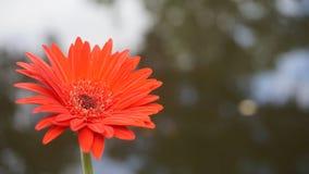 木兰庭院 库存图片