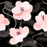 木兰开花开花花卉葡萄酒传染媒介无缝的样式 免版税库存照片