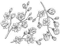 木兰花图表黑白色隔绝了剪影例证 免版税库存图片