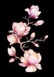 绘画木兰花墙纸 花卉手拉的水彩 免版税库存图片