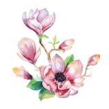 绘画木兰花墙纸 花卉手拉的水彩 向量例证