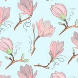 木兰花纹花样 重复与花的植物的纹理在白色背景的蓝色和粉红彩笔 拉长的现有量 图库摄影
