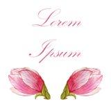 木兰水彩卡片 春天设计的手拉的元素 库存照片