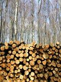 木切口在冬天森林里 免版税图库摄影