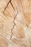 木切片纹理  免版税库存照片
