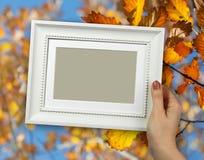 木制框架在黄色秋天橡木背景的妇女手上生叶 免版税库存照片