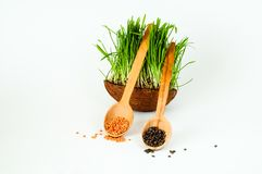 木匙子用扁豆和燕麦或绿草发芽的种子在椰子碗在白色背景 绿色生活 免版税图库摄影