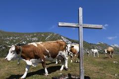 木十字架和母牛在山 免版税库存照片
