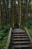 木台阶上升的步在深森林里 免版税图库摄影