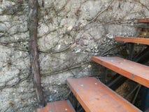 木台阶和墙壁植物 库存图片