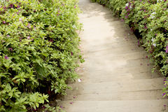 木台阶和皇家杜娟花树 图库摄影