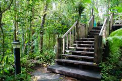 木台阶在森林里 免版税库存照片