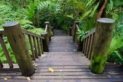 木台阶在森林里 库存图片