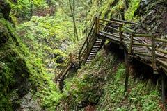 木台阶通过水在奥地利狼吞虎咽 免版税库存图片