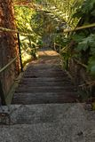 木台阶通过绿叶 免版税库存图片