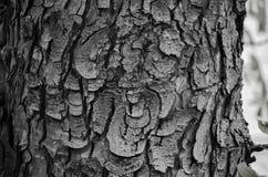 木吠声纹理 免版税图库摄影