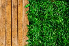 木和绿草 免版税库存照片