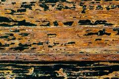 木困厄的老自然木破旧的背景关闭  免版税库存图片