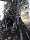 木圆锥形小屋在森林里 免版税库存图片