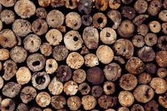 木圈子树桩背景抽象圆的柚木树  免版税库存照片