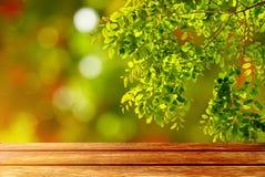 木在抽象背景的桌空的空间和自然绿色叶子 库存图片