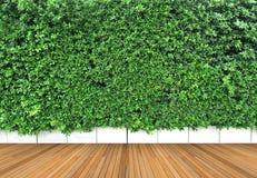 木地板和垂直的庭院有热带绿色叶子的 免版税库存图片