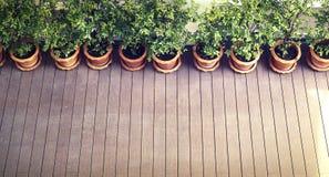 木地板有植物和篱芭背景,自由空间为增加文本空白的自然本底 库存照片