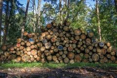 木堆在森林里 库存照片