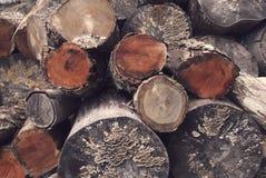 木堆在森林里 图库摄影