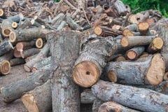 木堆树枝 免版税库存图片