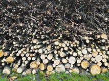木墙壁树干被分层堆积在草的木片断 库存照片