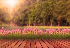 木大阳台和郁金香开花与绿色结构树计划 库存照片