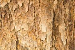 木头、墙壁、树和老木纹理 免版税库存图片