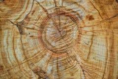 木头关闭锯切  木头背景和纹理 免版税图库摄影