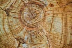 木头关闭锯切  木头背景和纹理 免版税库存图片