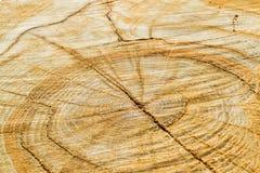 木头关闭锯切  木头背景和纹理 库存图片