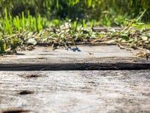 木头和杂草 库存图片