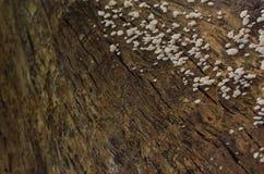 木头和蘑菇 免版税图库摄影