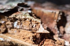 木头在自杀森林里 库存照片