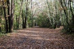 木头在雨以后的秋天,巨大bokeh 免版税库存照片