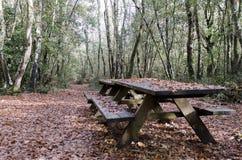 木头在雨以后的秋天 库存图片