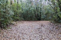 木头在雨以后的秋天 免版税库存照片