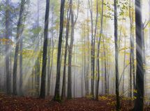 木头在10月 库存照片
