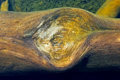 木头在Dog湖,图奥勒米草甸,优胜美地 免版税库存图片