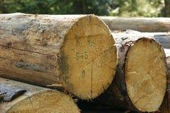 木头堆在森林里 免版税库存图片