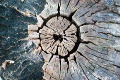 木头的中心 库存图片