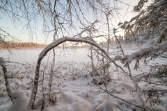 木头的冻结冬天湖在雪之下 免版税库存照片