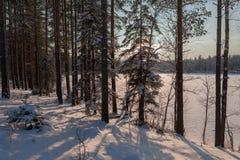 木头的冻结冬天湖在雪之下 库存图片