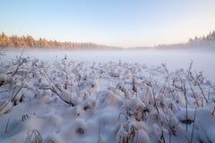 木头的冻结冬天湖在雪之下 图库摄影