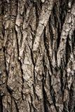 木头的吠声接近的纹理 库存照片